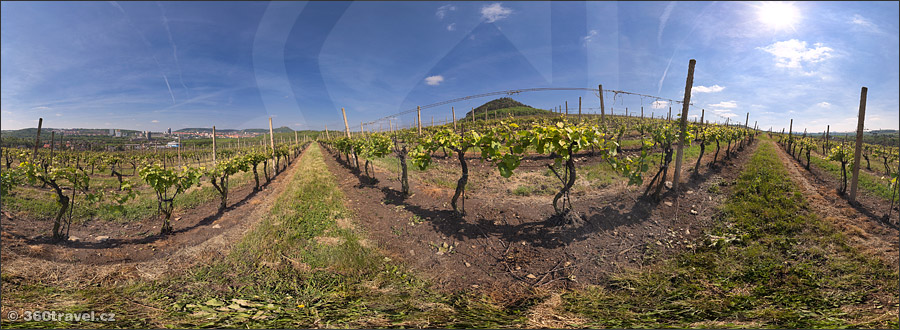Play virtual tour - Rudolice Vineyard